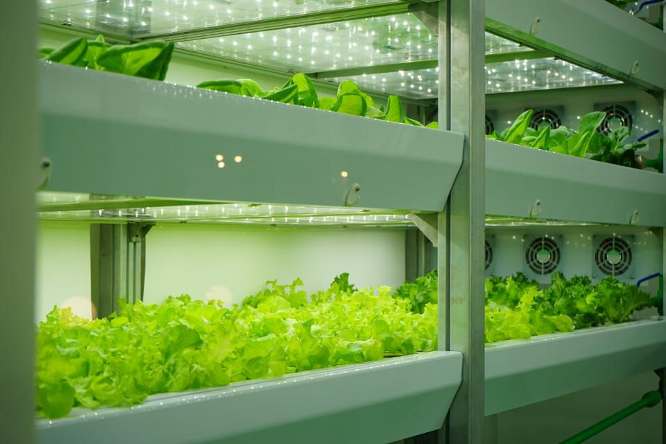 What The Future Of Farming Will Look Like Thanks To Technology